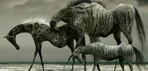 Grzegorz Kmin – Wild Horses