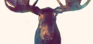 Amy Hamilton – Moose