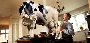 Svenn Hjartarson – Crazy cow