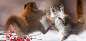 Andre Villeneuve – The boxing day