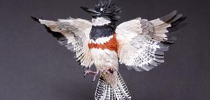 Les superbes oiseaux en papier de Diana Beltran Herrera
