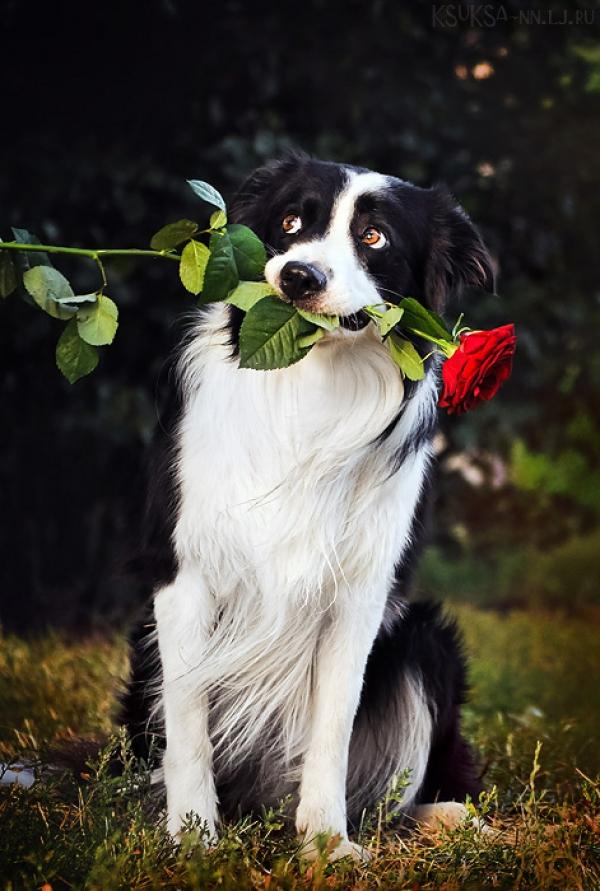 Ksenia_Raykova_15