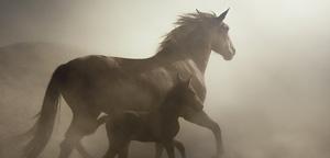 Mehmet Ilhan – Horse