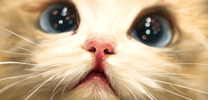 Catherine Steuer – Cute Cat