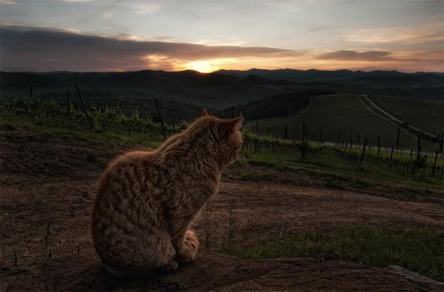 tuscan_tiger