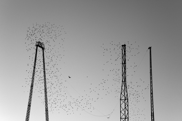 Starlings Over South Pier