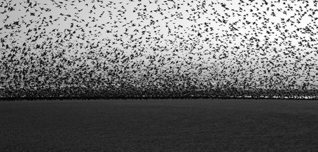 Superbes photographies d'oiseaux de Yannick Dixon